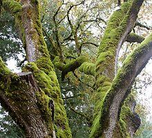 Mossy Tree by Nina Hofstadler