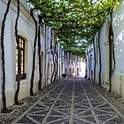 The Most Beautiful Street in the World by Robert Kelch, M.D.