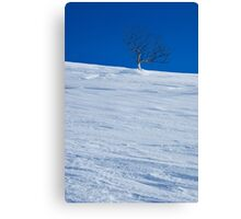 Waiting Out Winter Canvas Print