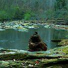Concord Creek, Smyrna, Georgia by Scott Mitchell