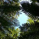 Secret Sky: Tarkine Forest, Tasmania, Australia by linfranca