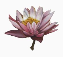 Lotus by Beth Lerman