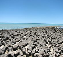 Stromatolites Shark Bay by kjcasey