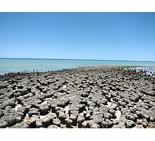 Stromatolites Shark Bay Photographic Print