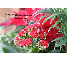 Christmas Flowers Photographic Print