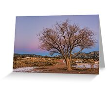 Contemplation Tree Greeting Card