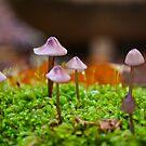 Pink Bonnets by LadyEloise