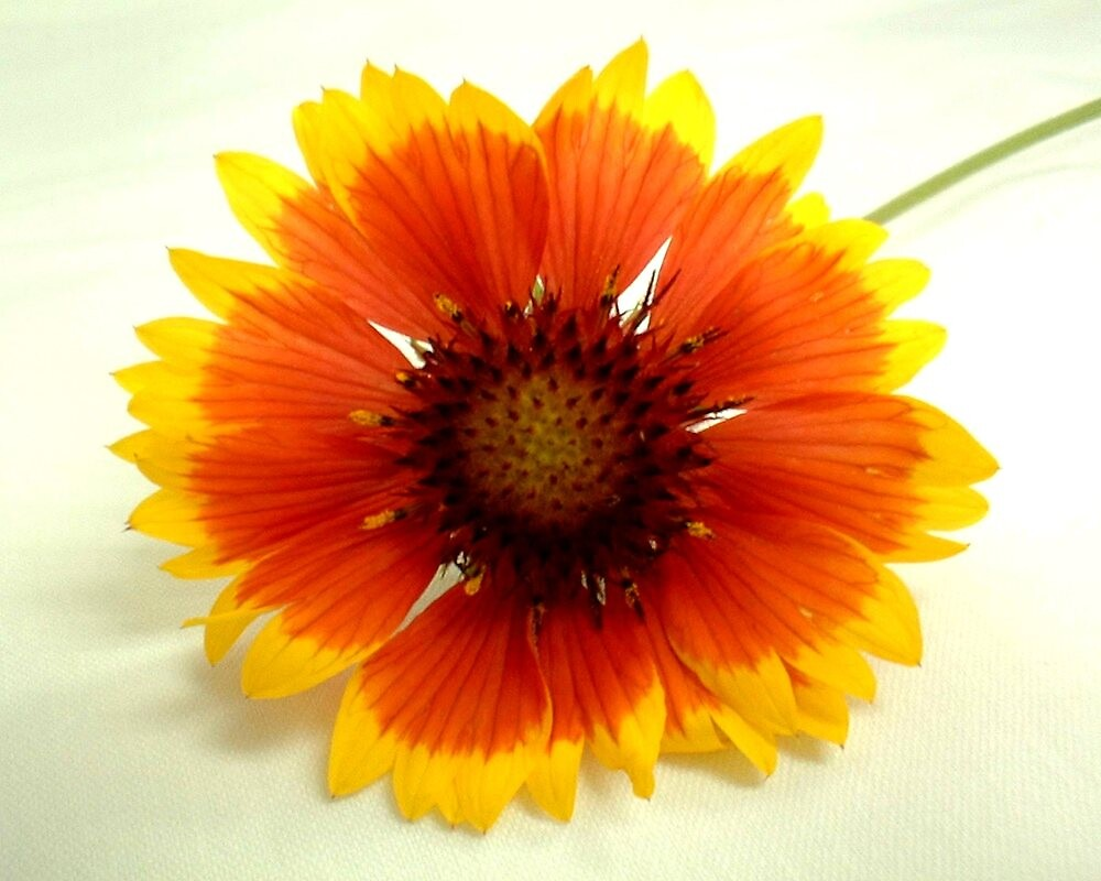 """Flower 6: by njchip123"