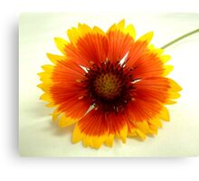 """Flower 6 by Chip Fatula Canvas Print"