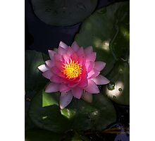Pond Lilly Photographic Print