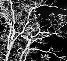 Black and White Tree I by Christina Rollo