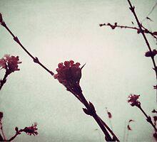 Winter Blossom I by Sybille Sterk