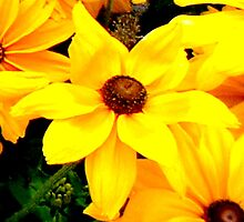 """""""Yellow Flower"""" by Chip Fatula by njchip123"""