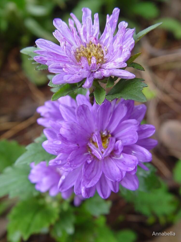 Blue Flowers by Annabella
