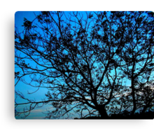 """""""Trees with Blue Sky"""" by Chip Fatula Canvas Print"""