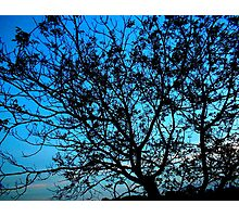 """""""Trees with Blue Sky"""" Photographic Print"""