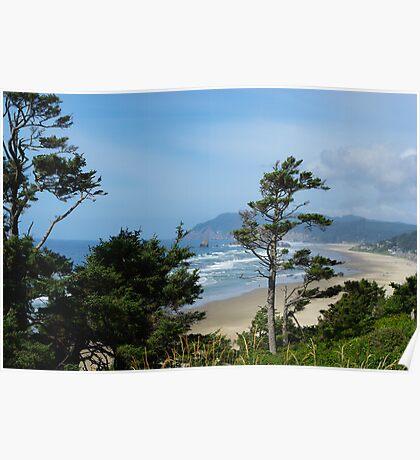 Wind bent trees, Pacific Coast, Oregon Poster