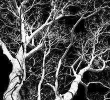Black and White Tree III by Christina Rollo