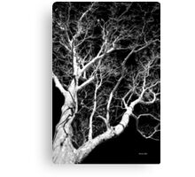 Black and White Tree III Canvas Print