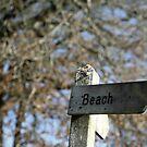 Beach!  by Pippa Carvell