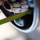 Turtle in pot by Drewlar