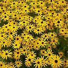 Yellow Flowers by Drewlar