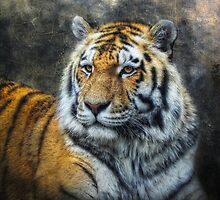 Panthera Tigris by Jo-PinX