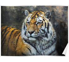 Panthera Tigris Poster