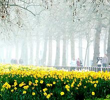 One Foggy Spring the Daffodils Bloomed by Jason Christopher