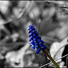 Blue Beauty by Abhijeet Basu
