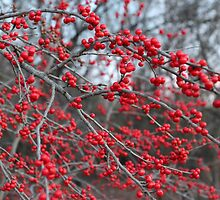 Berries In The Woods by Carolyn  Fletcher