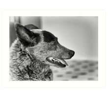 Portrait of an old dog Art Print