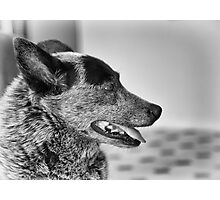 Portrait of an old dog Photographic Print