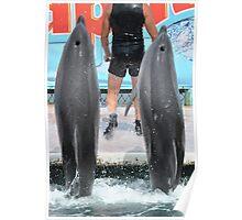 Dolphinarium  Poster