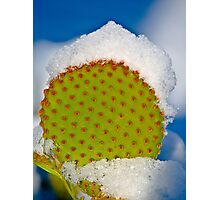 We Don't Get Snow Here!! Photographic Print