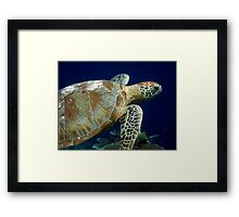 Underwater World - Turtle Framed Print