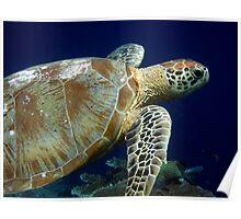 Underwater World - Turtle Poster
