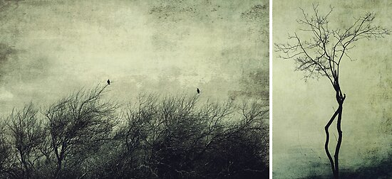 Nature ~ silhouettes by Anne Staub