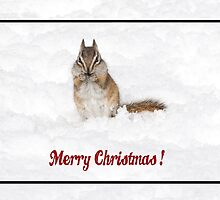 Merry Christmas Chipmunk by Tracy Riddell