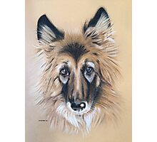 Cara the beautiful German Shepherd Photographic Print