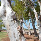 The Meaning of Leaning: Exmouth, Western Australia by linfranca