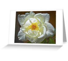 J.F.Kennedy Hybrid Tea Rose Greeting Card