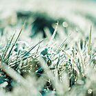 Winter Fields by Elowrey