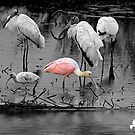 Spoony and Friends_Selective Color by TJ Baccari Photography