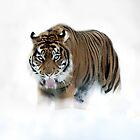 Winter hunting by Alan Mattison