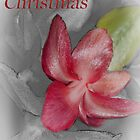 Christmas Cactus Greetings by Sherry Hallemeier