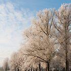 Frosty trees by David Isaacson