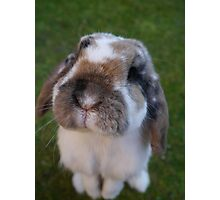 Bunny nose Photographic Print