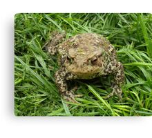 People think I'm a toad but i'm really a Prince Canvas Print
