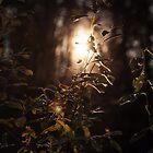 Weak forest dusk by SergiWave